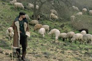 the-good-shepherd-4sized